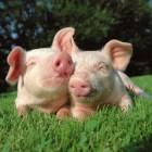 Vegetarisme, zin en onzin