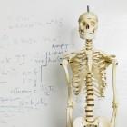 Anatomie - Bewegingen