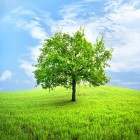 De afhankelijkheid van fotosynthese van golflengte licht