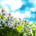 Stinzenplanten, de minder algemeen bekende soorten
