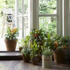Hydrocultuurplanten verzorgen, of kweken