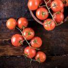 Het kweken van tomaten