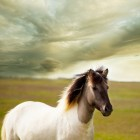De evolutie van het paard