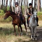 Paardenknoop: veiligheid voor het paard
