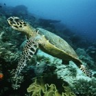 Dieren op de Galapagos Eilanden