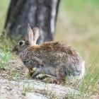 Konijnen: een konijnenhok maken of kopen