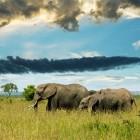 Het jachtluipaard, de baviaan en de olifant in Afrika