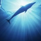 Werken met dolfijnen in de natuur
