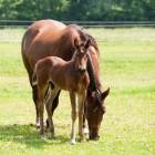 Het belang van ruwvoer voor paarden