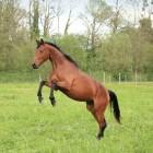 De medische keuring van een paard