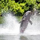Wat doet een dolfijnentrainer?