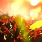 Herfst, wanneer begint het – 21, 22 of 23 september