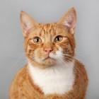 De kat met artrose