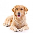 Orthopedisch hondenbed voor honden met gewrichtsproblemen