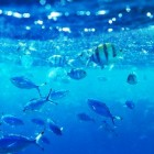 Is je huisdier geboren onder het sterrenbeeld Vissen?