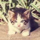 Een kat uit het asiel