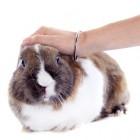 Voernijd of -agressie van het konijn