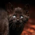 Kattengedrag: bang en angstig