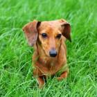 Hondentraining Train je hond met handsignalen
