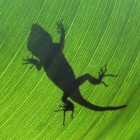 Ecologische biodiversiteitstheorieën