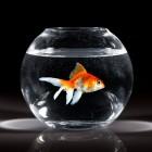 Het opstarten van een aquarium