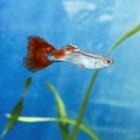Dierenweetjes - Vissen