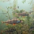 Aquarium inrichten voor beginners
