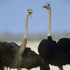 Vertaling vogelsoorten Frans-Engels-Nederlands
