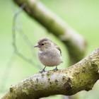 Vogels en hun taakverdeling, alles gericht op voortplanting