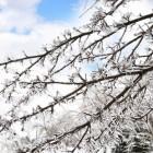 Vogels bijvoeren in de winter: geen slinger doppinda's