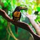 Waarom vogels op één poot staan en andere feiten