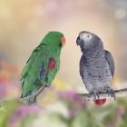 Zang- en roep geluiden van vogels zingen contact alarm