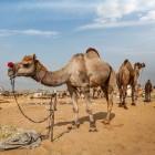 Olifant rijden & meer - Dierenmishandeling door toerisme