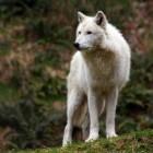 Aspergillose: een schimmelinfectie bij de hond