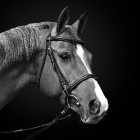 Paard: Blessure aan de collaterale hoefbandjes