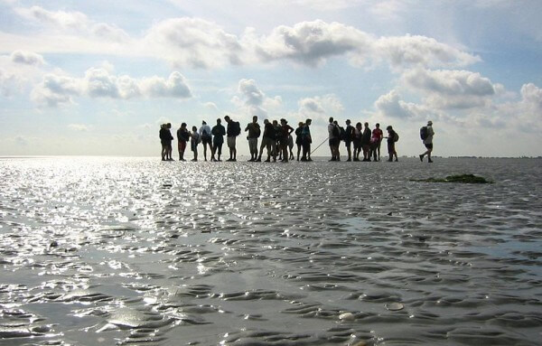 Wadden / Source: Michielvd, Wikimedia Commons (CC BY-SA-3.0)
