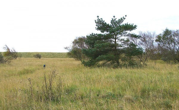 Trees on Mellum / Source: De: Benutzer: Uenue auf Wikipedia de, hochgeladen von AxelHH, Wikimedia Commons (Public domain)