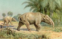 Paleomastodon / Bron: Heinrich Harder (1858-1935), Wikimedia Commons (Publiek domein)