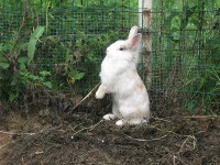 konijn springt